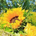 父の日の花