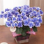 母の日のプレゼント!人気のお花おすすめ5選~イイハナ・ドットコム~